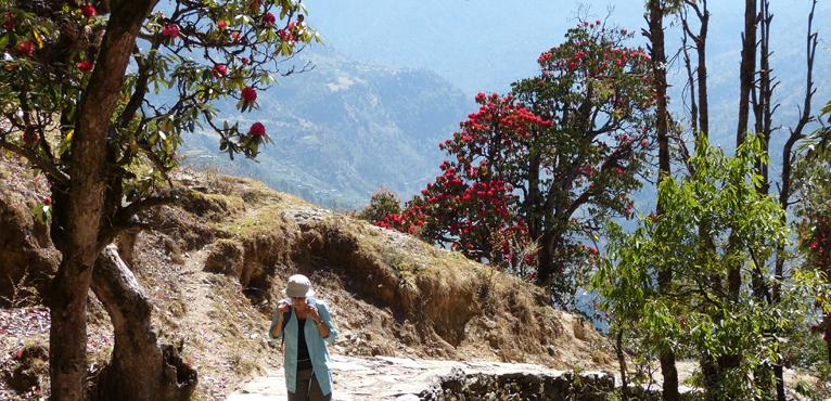 Rhododendron flowers Trek