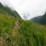 Spectacular Valley of Flowers Trek Open For Public