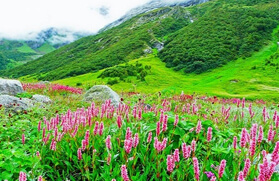The Kuari Pass Trek with Valley of Flowers