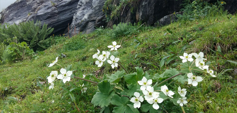 Kuari Pass - Valley of Flowers Trekking Tour