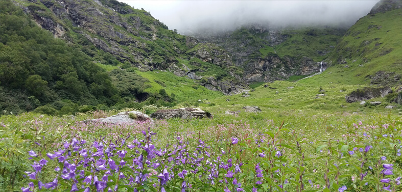 Kuari Pass - Valley of Flowers Treks